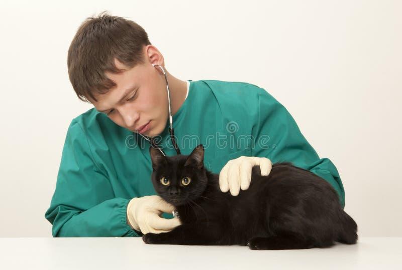 Зооветеринарные доктор и кот хирурга стоковая фотография