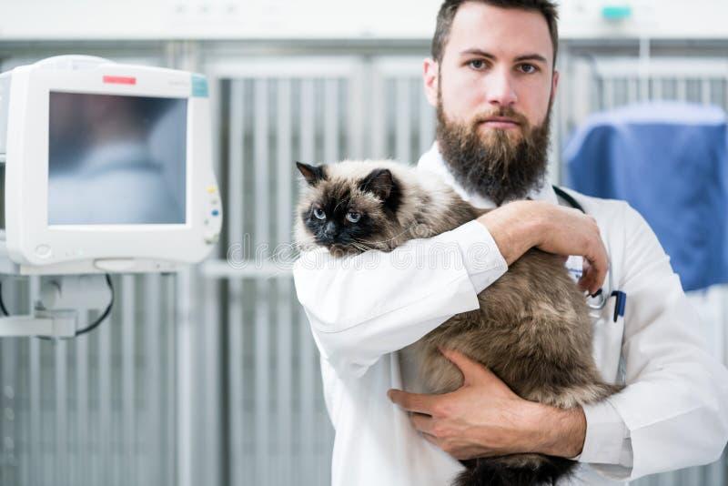 Зооветеринарный доктор любимчика держа кота терпеливый в его животной клинике стоковые фотографии rf