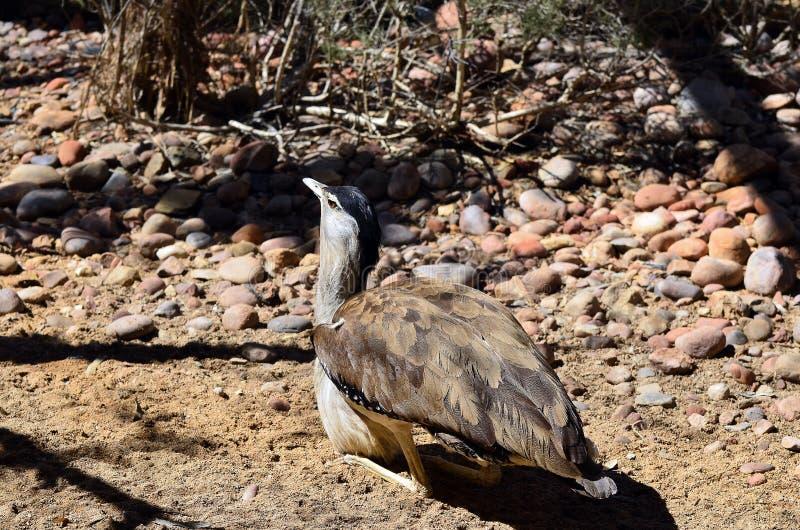 Зоология, австралийские птицы стоковая фотография rf