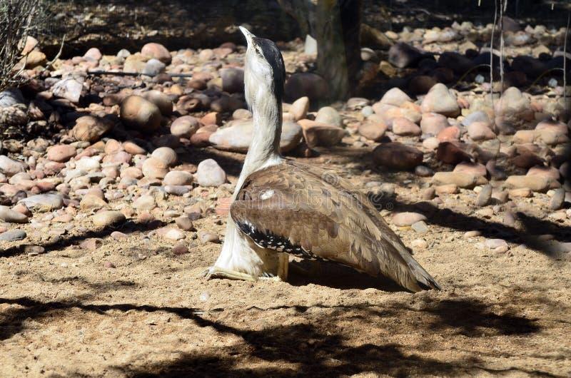 Зоология, австралийские птицы стоковое фото rf