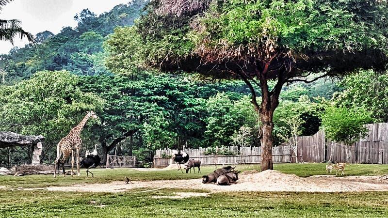 Download Зоопарк Африки стоковое изображение. изображение насчитывающей ангстрома - 81806069
