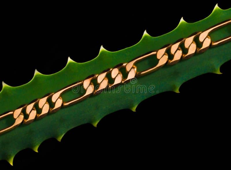 Золотая цепь на влюбленности лист, макрос стоковое изображение
