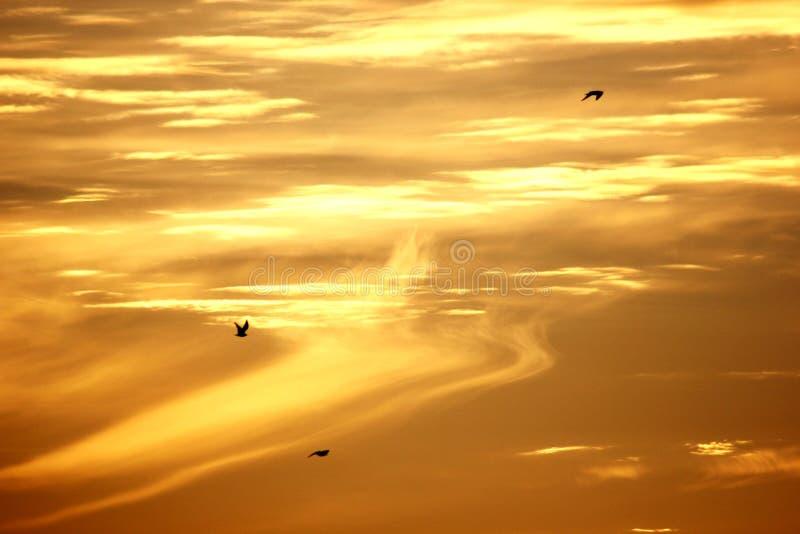 Золотое небо стоковые фотографии rf