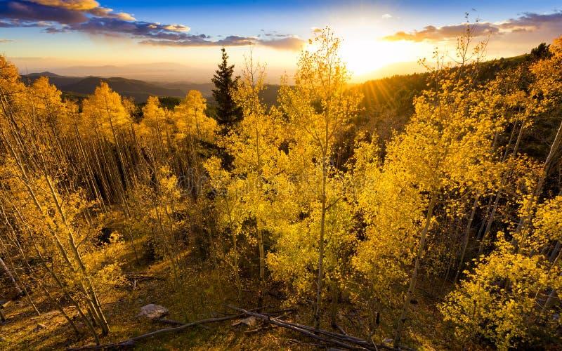 Золотой заход солнца Aspen стоковые изображения rf