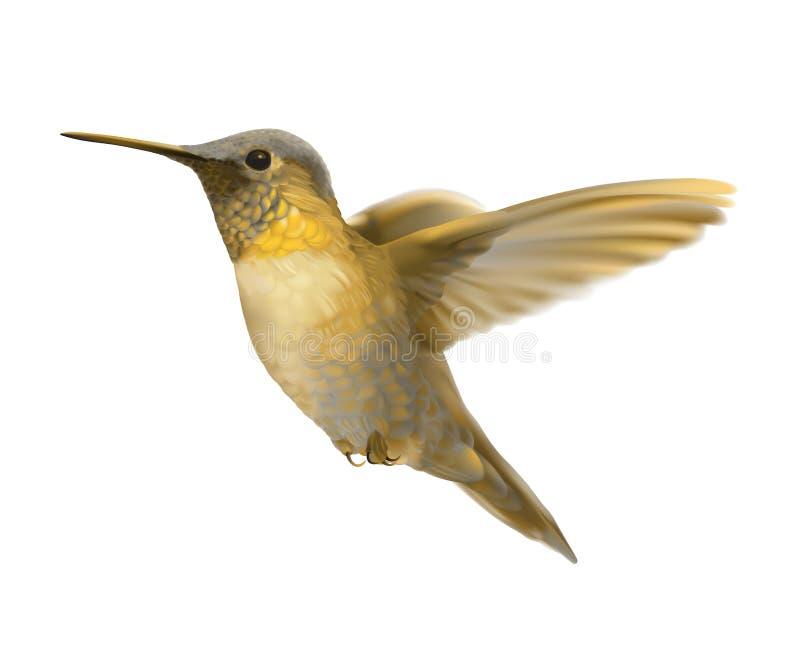 Золотой колибри летая бесплатная иллюстрация