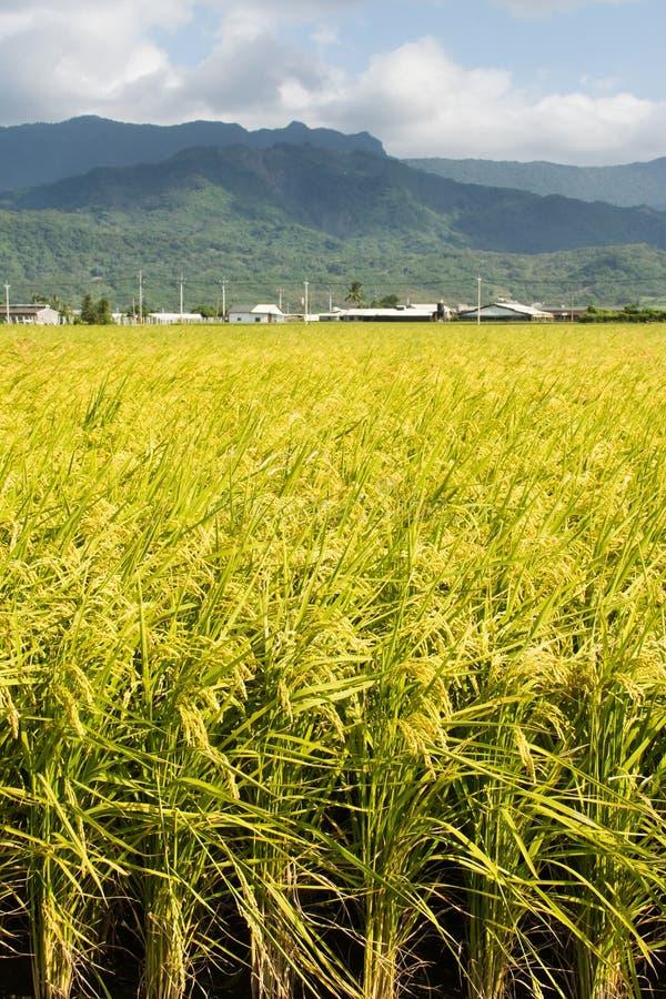 Золотой сельский пейзаж стоковое фото