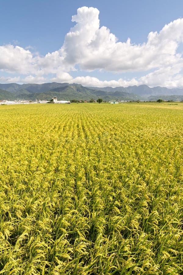 Золотой сельский пейзаж стоковые фото
