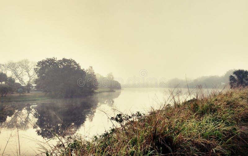 Золотой туман на озере стоковые изображения