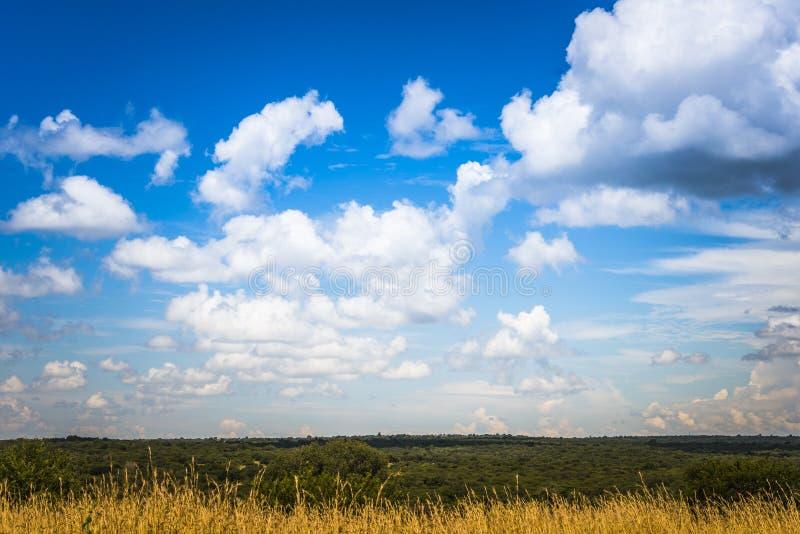 Золото и зеленые растения с голубым небом и белыми облаками стоковая фотография