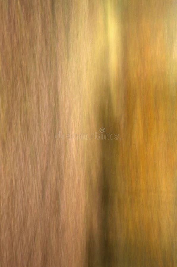 Золото и расшива стоковое изображение rf