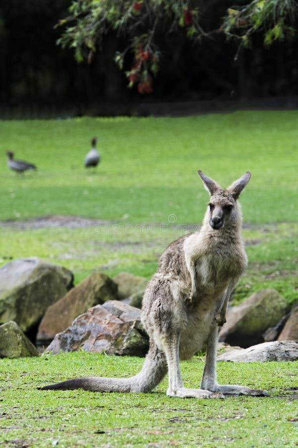 золото Квинсленд свободного полета Австралии стоковое изображение rf