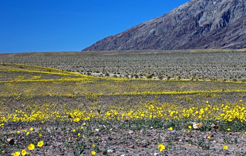 Золото пустыни стоковые изображения rf