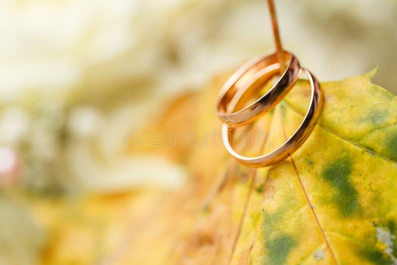Золотые обручальные кольца в листьях осени стоковая фотография rf