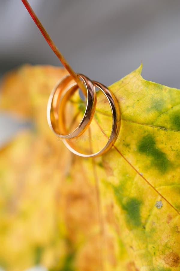 Золотые обручальные кольца в листьях осени стоковое фото