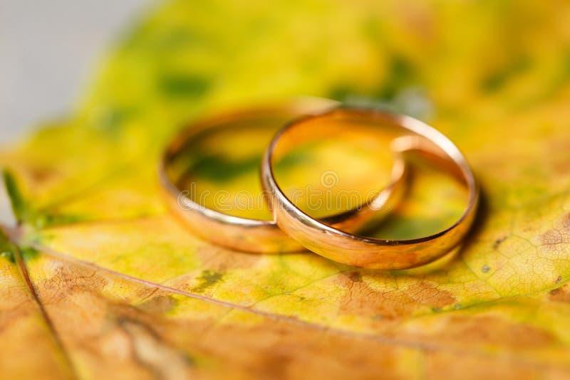 Золотые обручальные кольца в листьях осени стоковая фотография