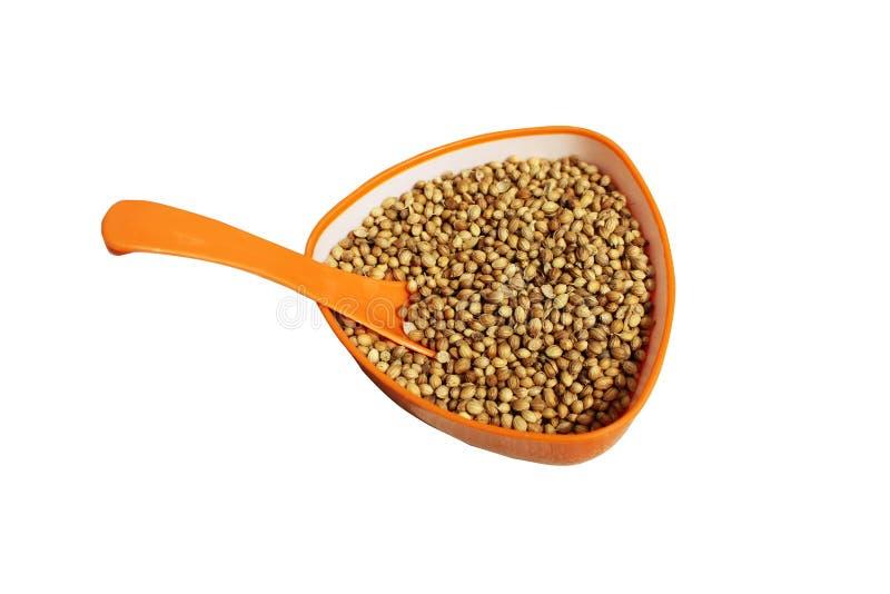 Золотые семена кориандра в оранжевой чашке с ложкой стоковые фото