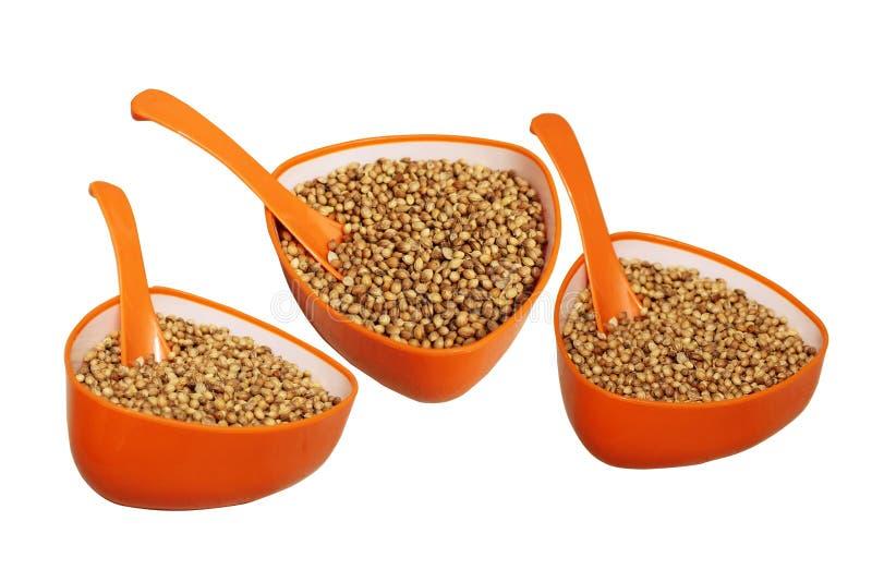 Золотые семена кориандра в оранжевой чашке с ложкой стоковая фотография