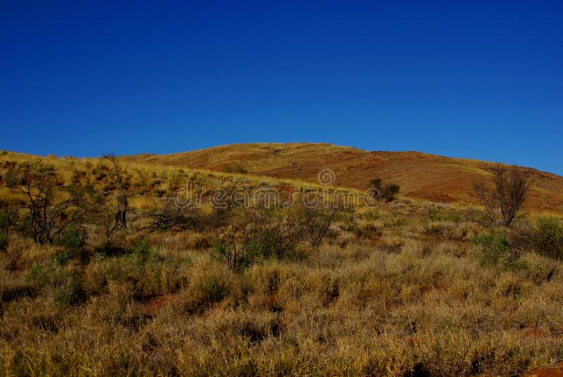 Download Золотые холмы Spinifex стоковое изображение. изображение насчитывающей холм - 81810255