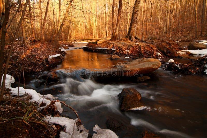 Золотые часы - сокровище леса - страна чудес зимы стоковые фотографии rf