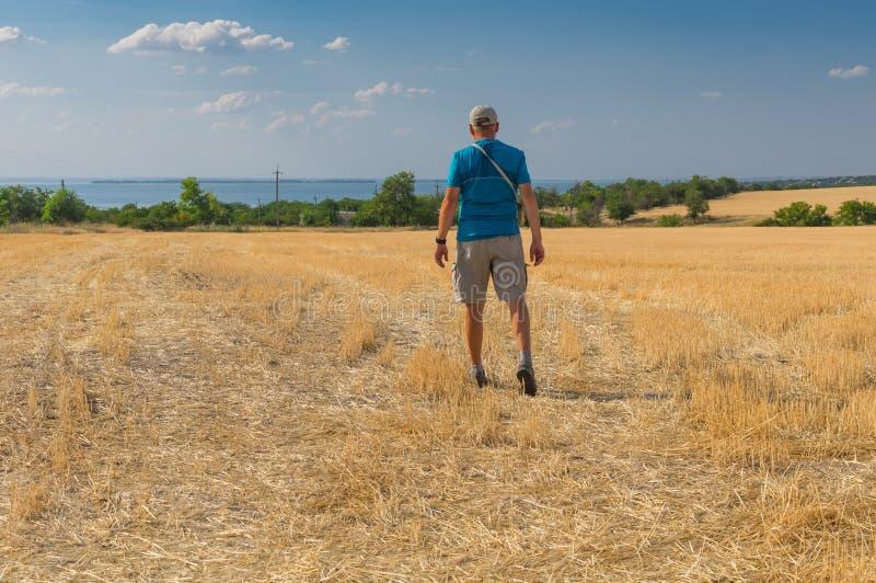 Зрелая рубрика hiker для реки Dnipro через сжатое пшеничное поле стоковые изображения