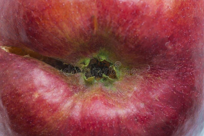 Зрелое красное яблоко с peduncle стоковое изображение rf