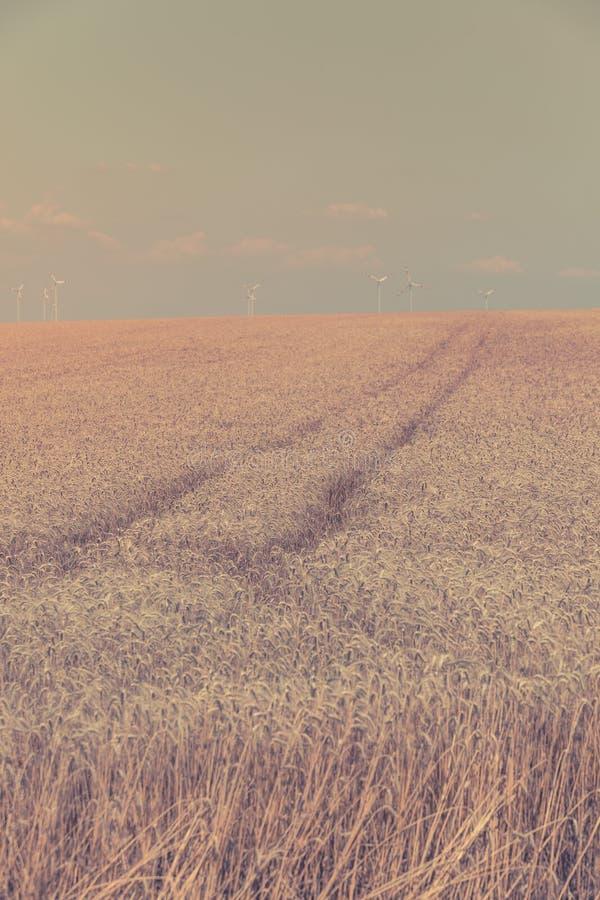 Зрелое поле хлопьев стоковое фото rf