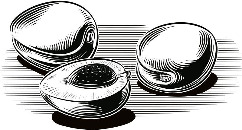 Зрелые абрикосы на белизне бесплатная иллюстрация
