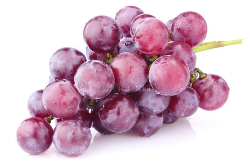 Зрелые виноградины стоковые изображения