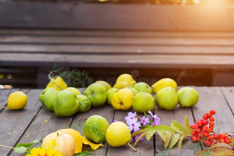 Зрелые груши на деревянном столе с листьями осени и ягодами рябины стоковые фото