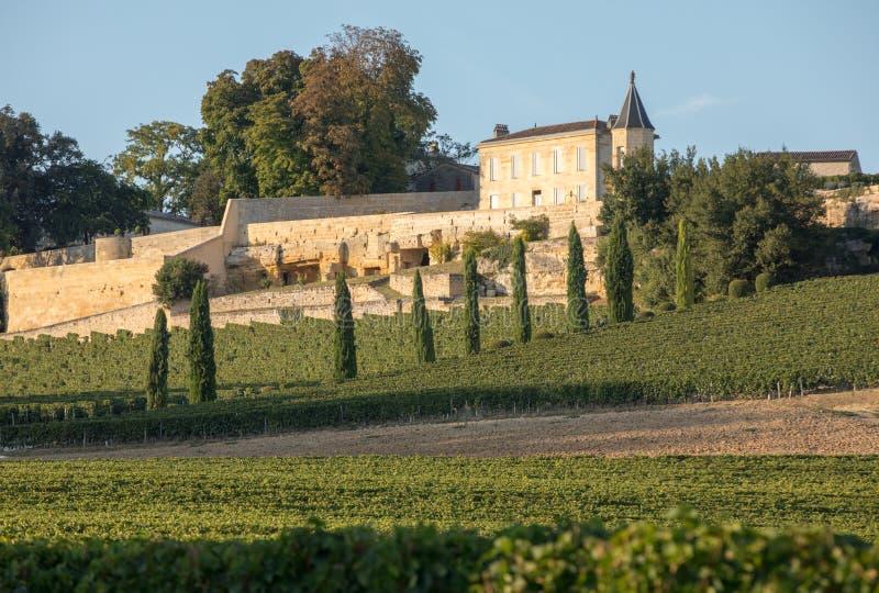 Зрелые красные виноградины на строках лоз в vienyard Ла Madeleine Clos перед сбором вина в регионе Emilion Святого стоковое изображение
