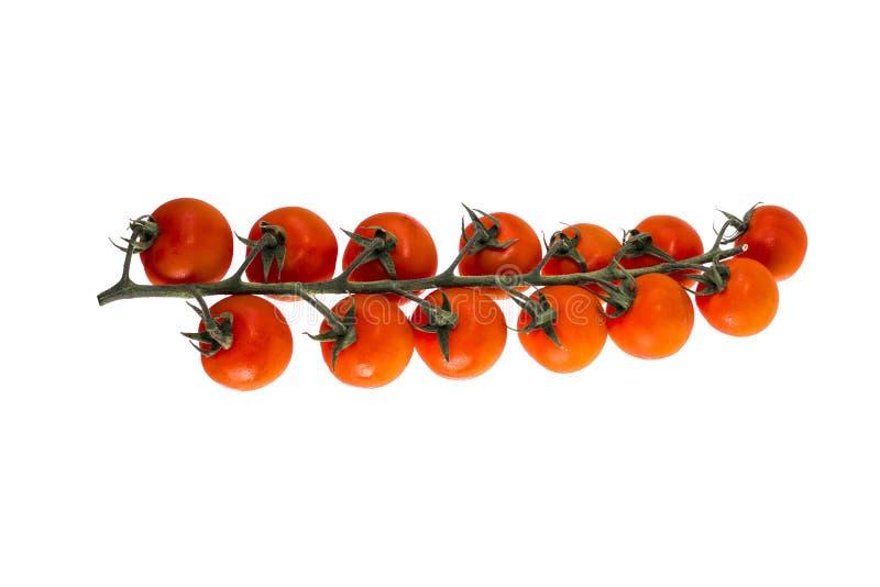 Зрелые красные томаты вишни стоковое фото rf