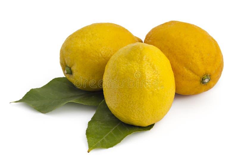 Зрелые лимоны, цитрусовые фрукты стоковое фото