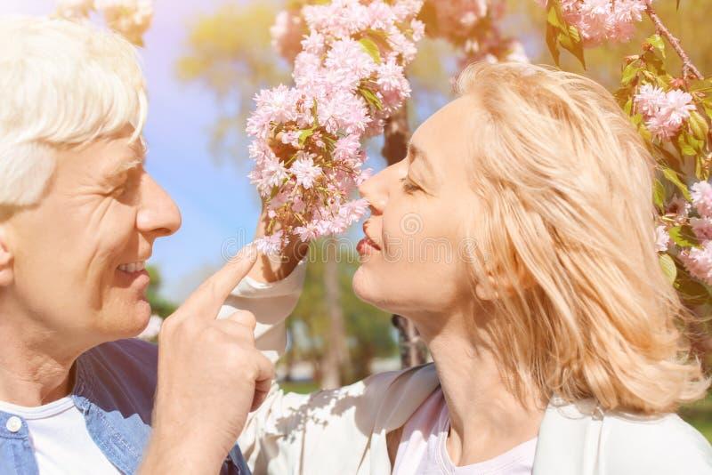Зрелые пары около цвести дерева в парке на весенний день стоковое изображение