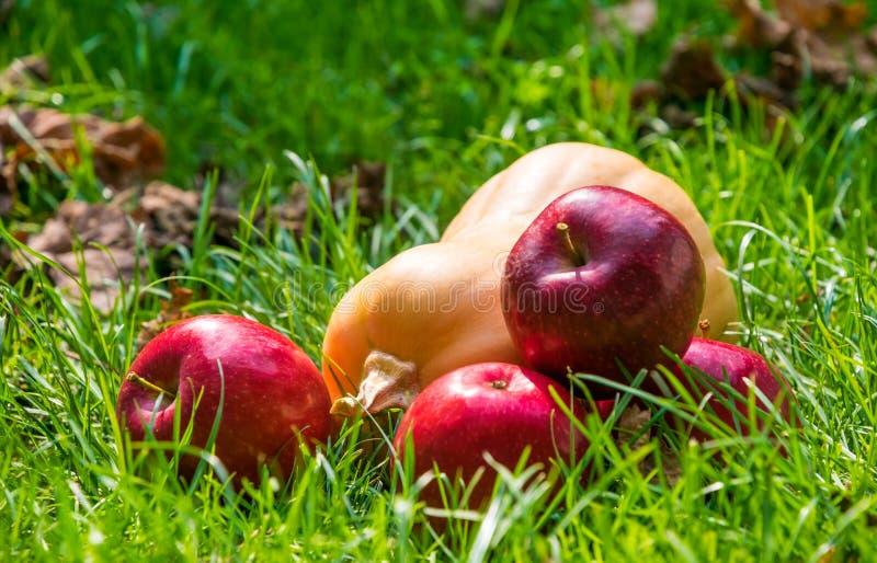Зрелые яблоки осени и желтая тыква Пейзаж на хеллоуин стоковые изображения rf