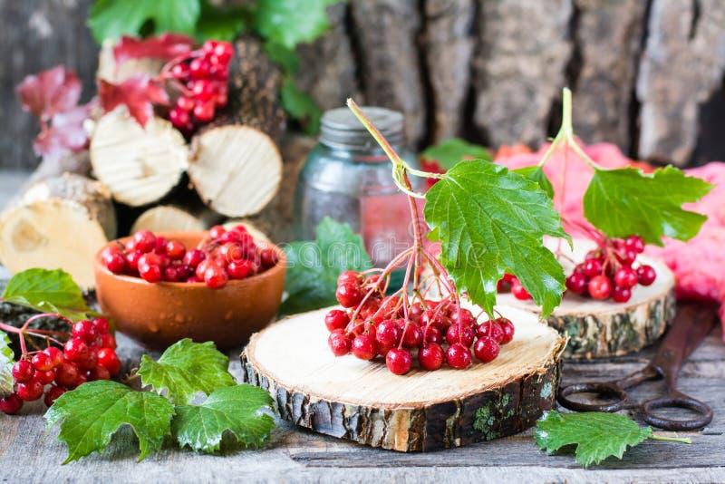 Зрелые ягоды калины на ветви с листьями стоковые фото