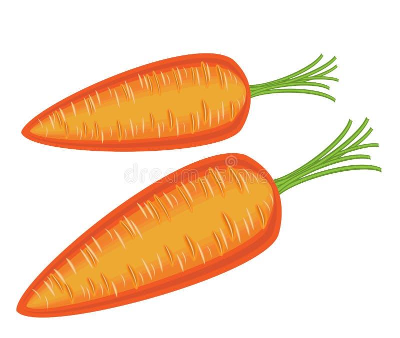 Зрелый красивый красный овощ Сочные вкусные моркови, источник полезных витаминов Изображение цвета r иллюстрация вектора