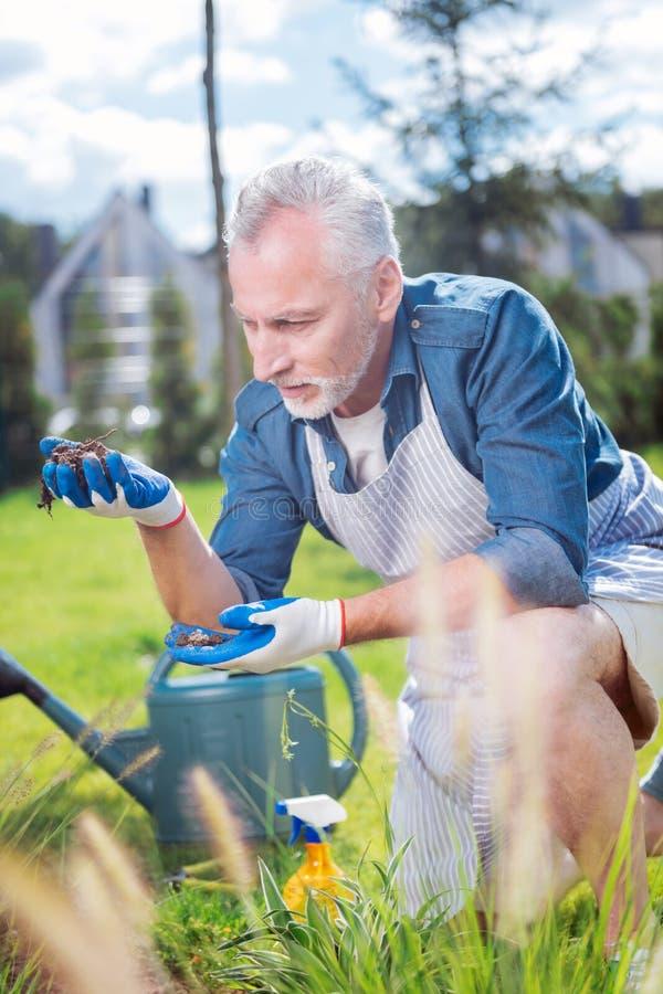 Зрелый человек любящий садоводства смотря почву в его кровати сада стоковые фотографии rf
