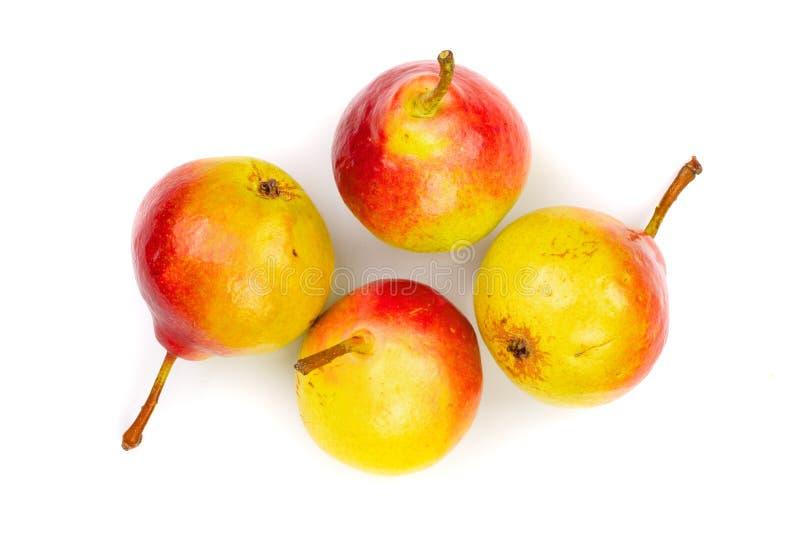 4 зрелых красных желтых плодоовощ груши изолированного на белой предпосылке Взгляд сверху Плоская картина положения стоковое изображение