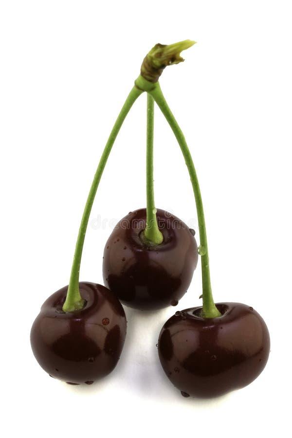 3 зрелых красных ягоды вишни изолированной на белой предпосылке стоковые фото