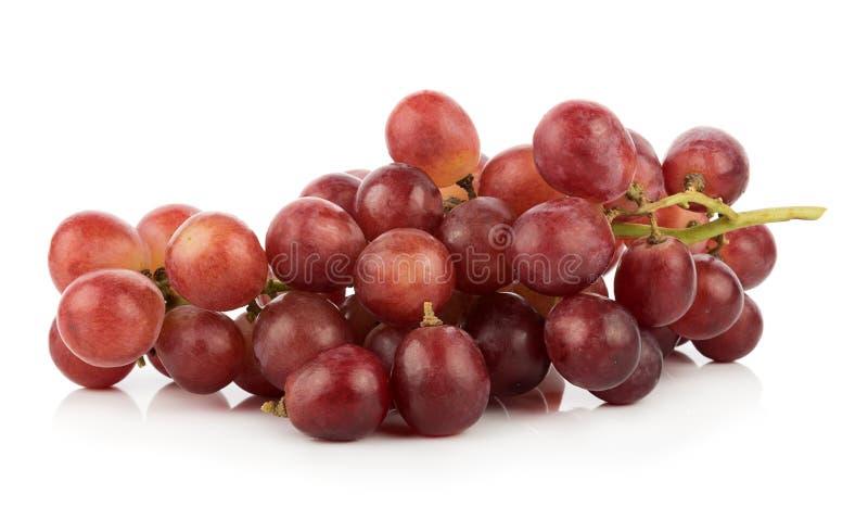 Зрелая красная виноградина на белизне стоковое фото