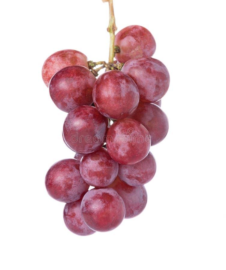 Зрелая красная виноградина на белой предпосылке стоковая фотография