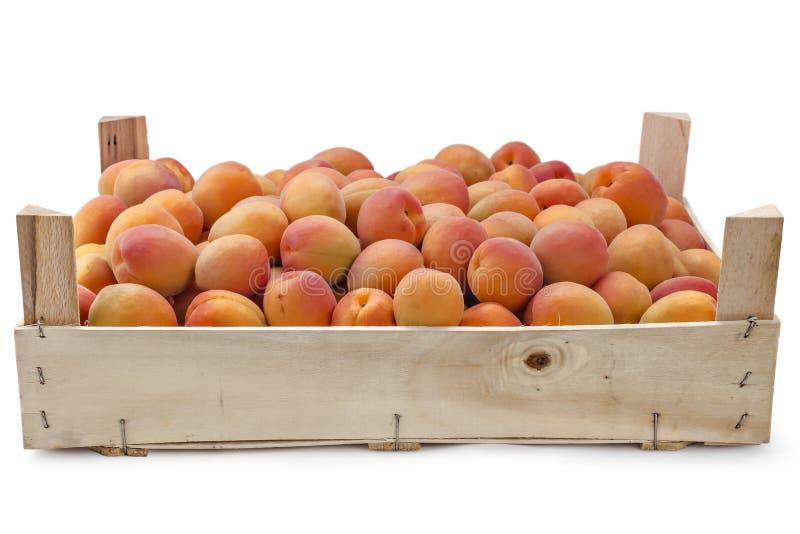 зрелое абрикосов свежее стоковое изображение rf