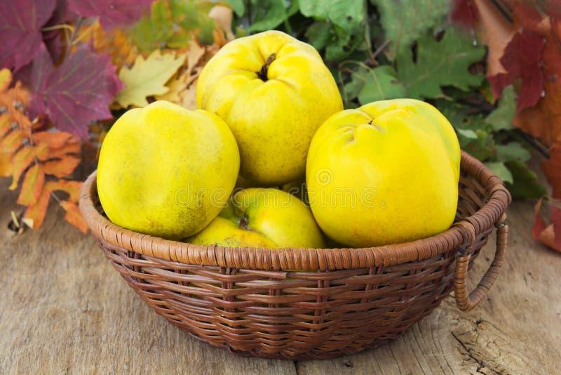 Зрелые плодоовощи стоковые изображения rf