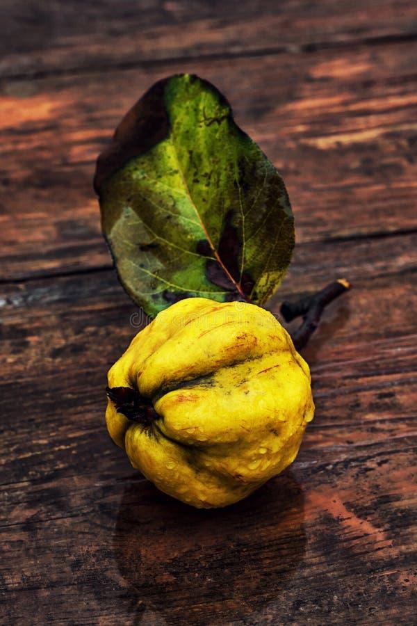Зрелый плодоовощ айвы стоковое фото rf
