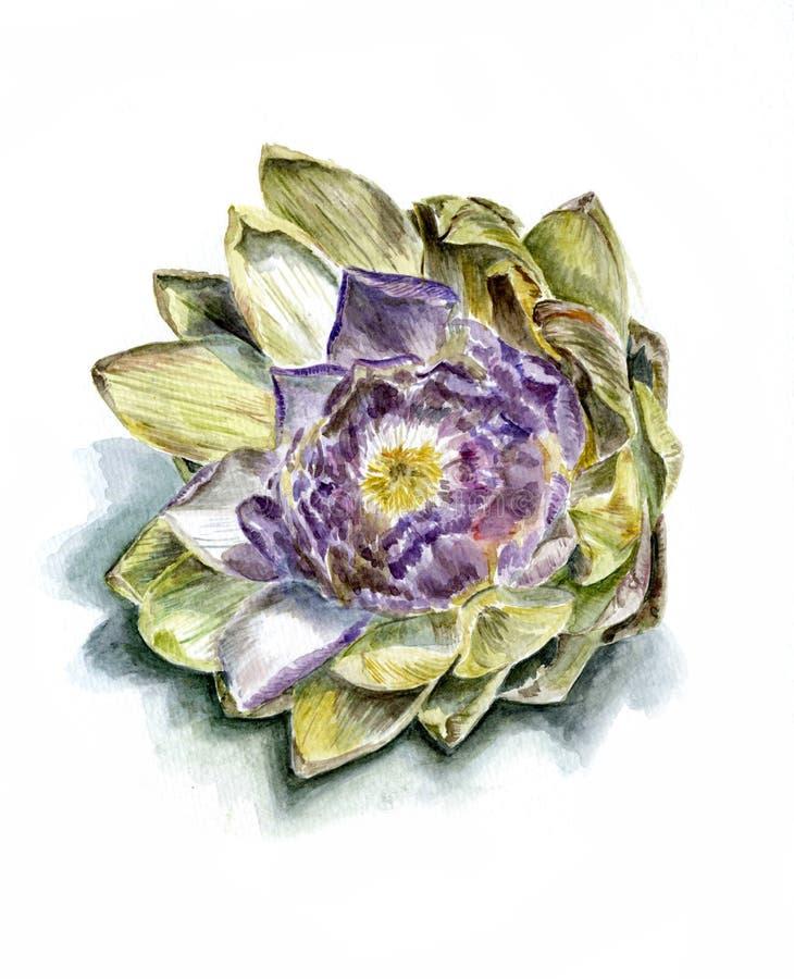 Зрелый фронт цветка артишока стоковое фото rf
