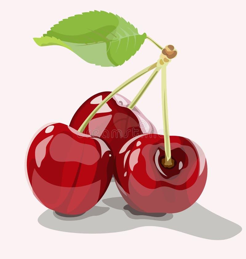 3 зрелых вишни бесплатная иллюстрация