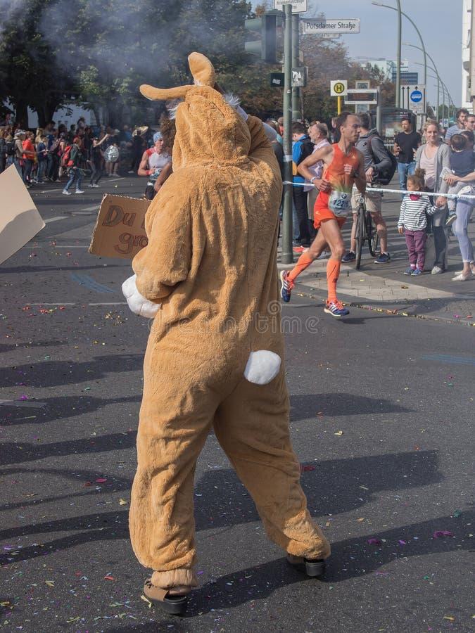 Зритель с костюмом и бегунами кролика на марафоне 2016 Берлина стоковая фотография