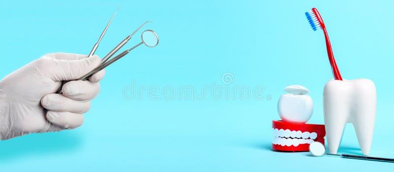 Зубоврачебная концепция здоровья и teethcare Зубоврачебное зеркало, человеческая модель челюсти и зубоврачебная зубочистка около  стоковые фото