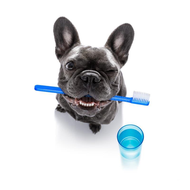 Зубоврачебная собака зубной щетки стоковые изображения