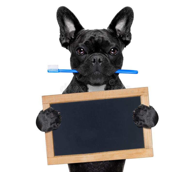 Зубоврачебная собака зубной щетки стоковая фотография